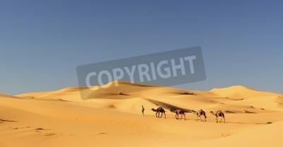Fototapeta Camel Caravan w Sahary