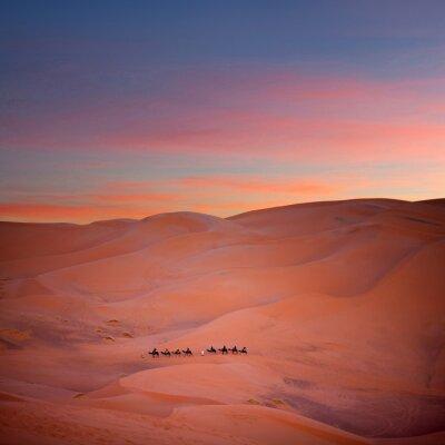 Fototapeta Camel trekking w Erg Chebbi, Sahara Zachodnia, Maroko