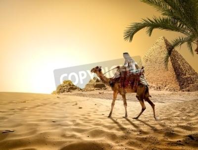 Fototapeta Camel w pobliżu piramid w gorącej pustyni egipskiej