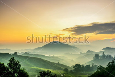 Fototapeta Cameron Highlands ,Malaysia. Sunrise  at green tea farm mountain. Dramatic moving cloud in nature landscape on sunshine morning.