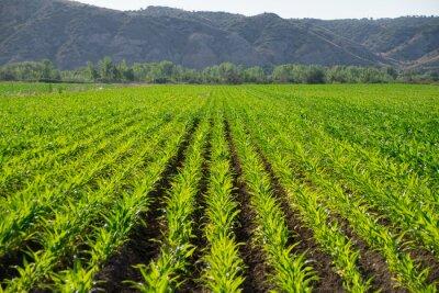 Fototapeta campos de cultivo