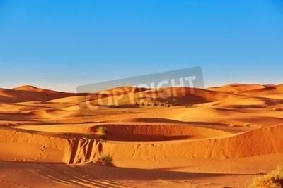 Fototapeta Caravan Camel przechodzi wydmy na Saharze, Merzouga, Maroko