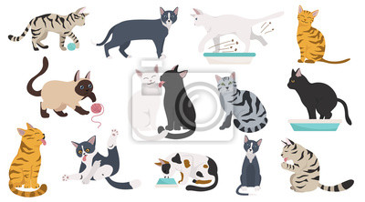 Fototapeta Cartoon cat characters collection. Different cat`s poses, yoga and emotions set. Flat color simple style design.