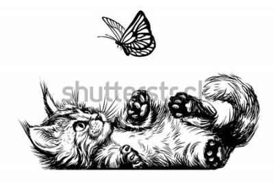 Fototapeta Cat. A kitten is playing with a butterfly. A wall sticker with the image of a Maine Coon kitten.