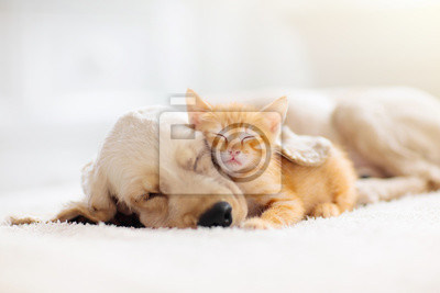 Fototapeta Cat and dog sleeping. Puppy and kitten sleep.