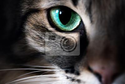 Fototapeta Cat eye macro closeup animal