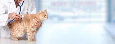 Fototapeta Cat Ginger z lekarzem weterynarii.