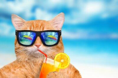 Fototapeta Cat okularach relaks w tle morza