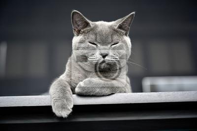 Fototapeta cat with green eyes