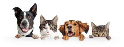 Fototapeta Cats and Dogs Peeking Over White Web Banner
