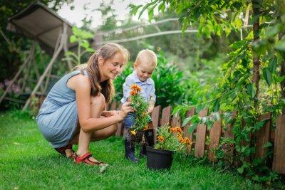 Fototapeta Caucasian mom and son transplant flowers in garden