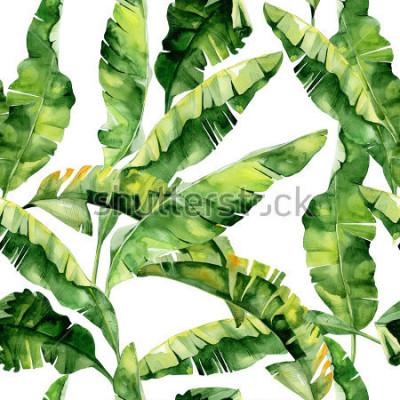 Fototapeta Charakterowa akwareli ilustracja tropikalni liście, zwarta dżungla. Wzór z motywem tropic summertime może być jako tekstura tło, papier pakowy, tkaniny, tapety. Liście palmy bananowej.