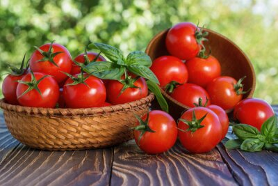 Fototapeta cherry tomatoes and basil on wooden board outdoors