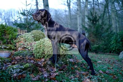 Fototapeta chien