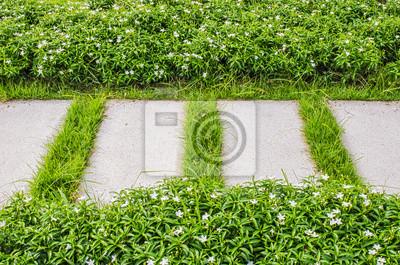 Chodnik i trawa zielona