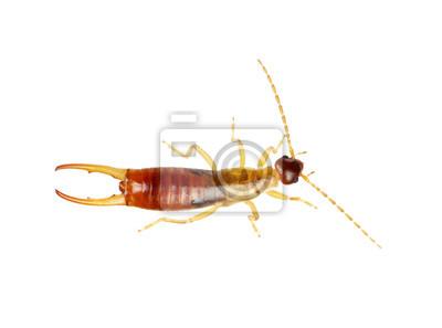 Fototapeta chrząszcz