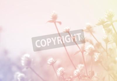 Fototapeta Chwastów kwiatów w zabytkowe stylu koloru tekstury dla tła