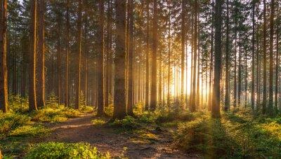 Fototapeta Cichy Las na wiosnę z pięknymi jasnymi promieniami słońca