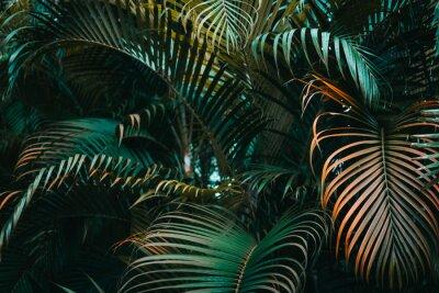 Fototapeta Ciemnozielony wzór liści palmowych. Układ kreatywny, poziomy