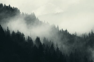 Fototapeta ciemny las i góry, mglisty krajobraz
