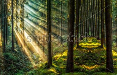 Fototapeta Ciemny las światło słoneczne krajobraz