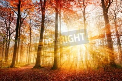 Fototapeta Ciepłe jesienne dekoracje w lesie, a słońce odlewania piękne promienie światła przez mgły i drzew