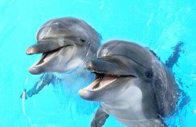Fototapeta Cieszę się, że piękna Delfin uśmiecha się w błękitne wody na basenie