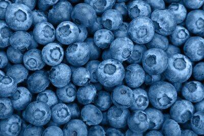 Fototapeta Close up background of blue toned fresh blueberry