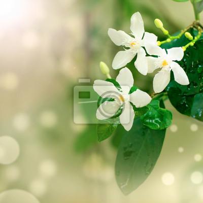 Close-up beautiful white flowers