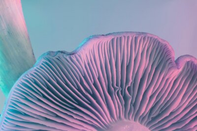 Fototapeta Close up bunch mushrooms color light. Beautiful plant minimal in neon light. Minimalism retro style concept. Background pattern for design. Macro Photography View.