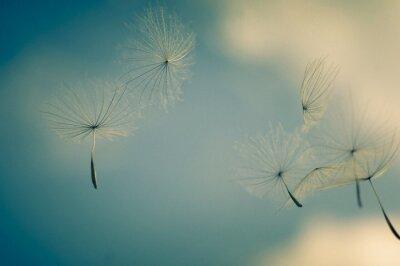 Fototapeta Close-up Of Dandelion Against Sky