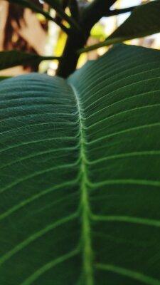 Fototapeta Close-up Of Leaves
