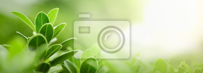Fototapeta Close up of nature view green leaf on blurred greenery background under sunlight with bokeh and copy space using as background natural plants landscape, ecology wallpaper or cover concept.