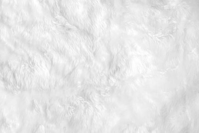 Fototapeta Closeup animal white wool sheep background in top view light natural detail, grey fluffy seamless cotton texture. Wrinkled lamb fur coat skin, rug mat raw material, fleece woolly textile concept