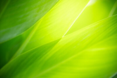 Fototapeta Closeup nature view of green leaf on blurred greenery background in garden with copy space using as background natural green plants landscape, ecology, fresh wallpaper concept.