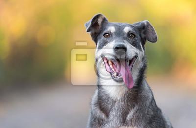 Fototapeta Closeup photo of an adorable dog.