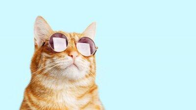 Fototapeta Closeup portrait of funny ginger cat wearing sunglasses isolated on light cyan. Copyspace.