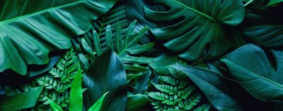 Fototapeta closeup tropical green leaf background. Flat lay, fresh wallpaper banner concept