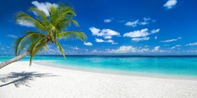 Fototapeta Coco palmy panorama szeroki format na tropikalny raj dream beach