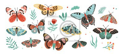 Fototapeta Collection of elegant exotic butterflies and moths isolated on white background. Set of tropical flying insects with colorful wings. Bundle of decorative design elements. Flat vector illustration.