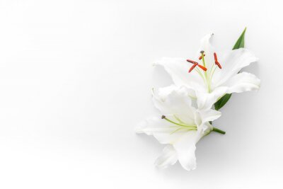 Fototapeta Condolence card with white flowers lily. Funeral symbol