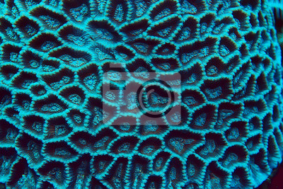Fototapeta coral reef macro / texture, abstract marine ecosystem background on a coral reef