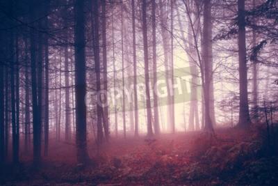 Fototapeta Creepy czerwone nasycone rocznika drzew leśnych. Stosowany filtr kolorów i filtr vintage.