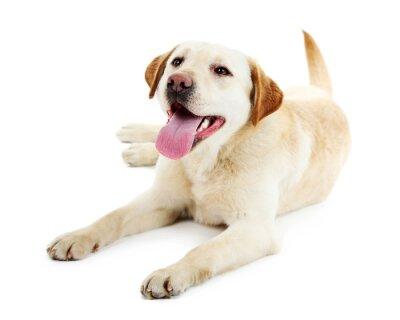 Fototapeta Cute dog na białym tle