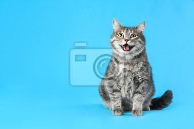 Fototapeta Cute gray tabby cat on light blue background, space for text. Lovely pet