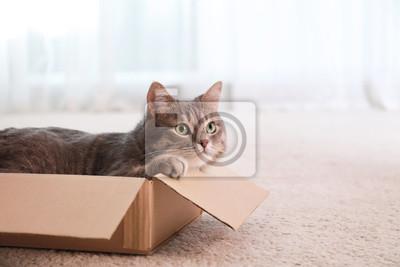 Fototapeta Cute grey tabby cat in cardboard box on floor at home