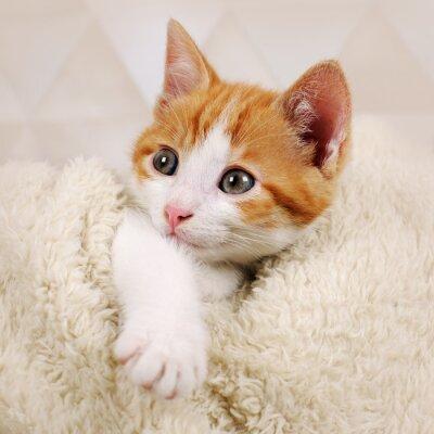 Fototapeta cute kitten