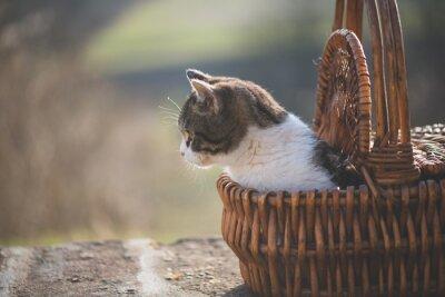 Fototapeta Cute Kot stwarzających na zewnątrz