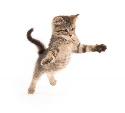 Fototapeta Cute pręgowany kotek skoki