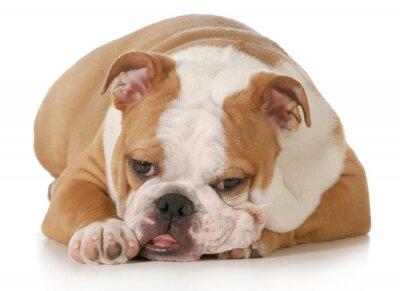 Fototapeta Cute puppy